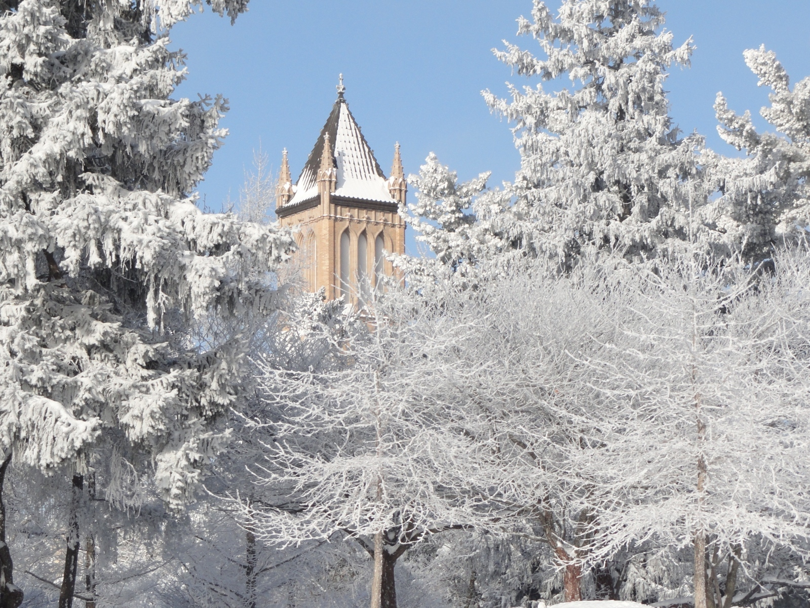picture of Campanile and trees in winter